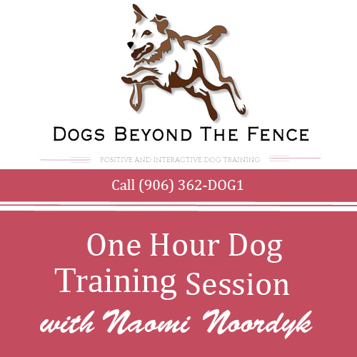 One Hour Dog Training Session